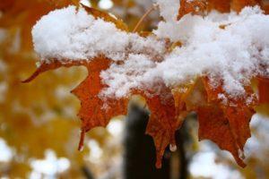 Снег на листьях фото