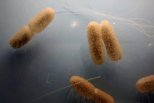 Бактерии фото