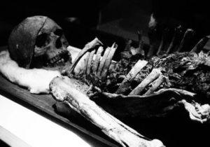 Превращение трупа в скелет фото