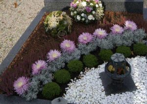 Высаженные цветы фото