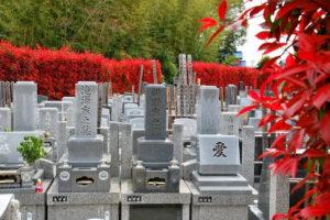 Могилы в отсутствии цветов в других странах фото